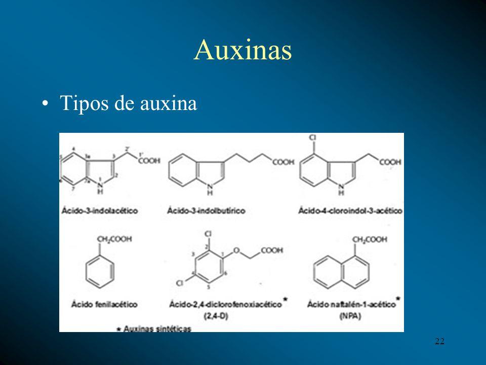 Auxinas Tipos de auxina 22