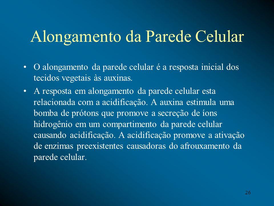 Alongamento da Parede Celular O alongamento da parede celular é a resposta inicial dos tecidos vegetais às auxinas. A resposta em alongamento da pared