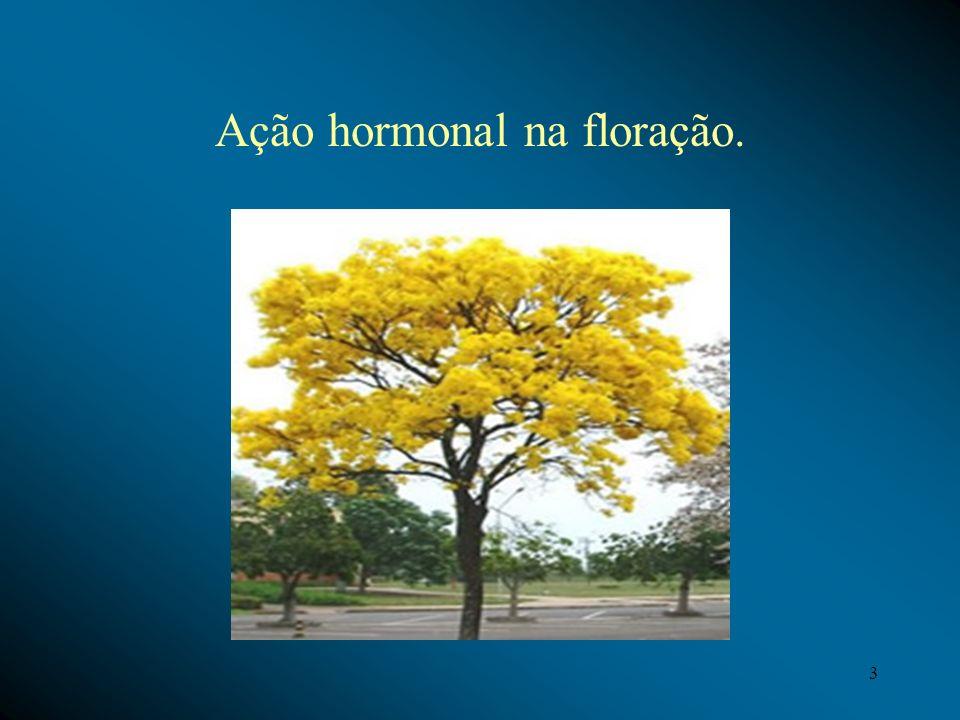 Ação hormonal na floração. 3