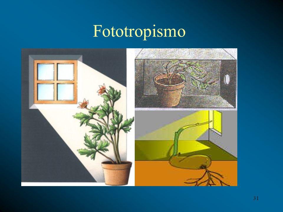 Fototropismo 31