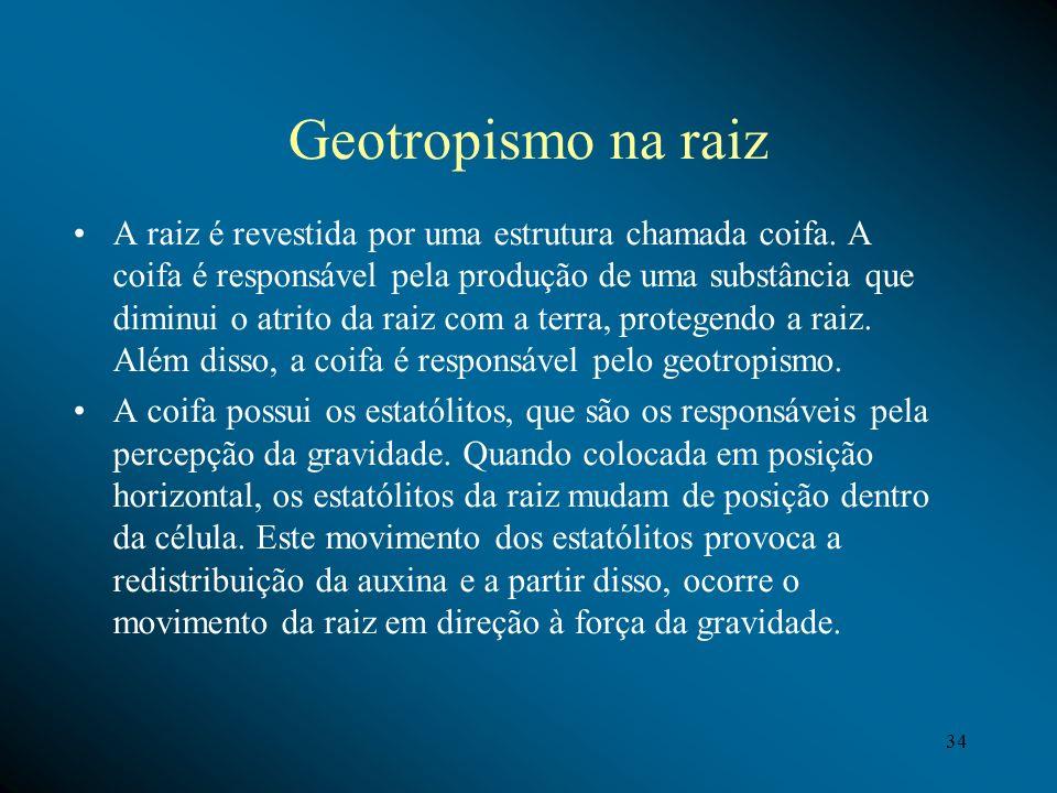 Geotropismo na raiz A raiz é revestida por uma estrutura chamada coifa. A coifa é responsável pela produção de uma substância que diminui o atrito da