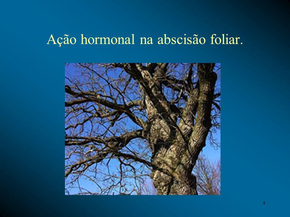 Ação hormonal na abscisão foliar. 4