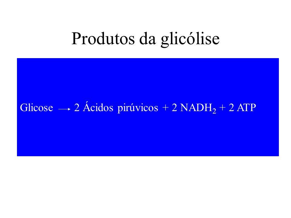 Glicose 2 Ácidos pirúvicos + 2 NADH 2 + 2 ATP Produtos da glicólise