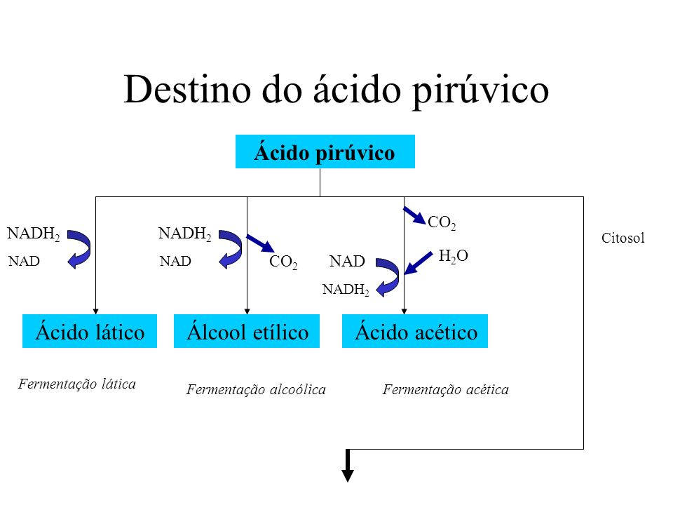Destino do ácido pirúvico Ácido pirúvico Ácido lático NADH 2 NAD Álcool etílico NADH 2 NAD CO 2 Ácido acético NAD NADH 2 CO 2 H2OH2O Citosol Fermentaç