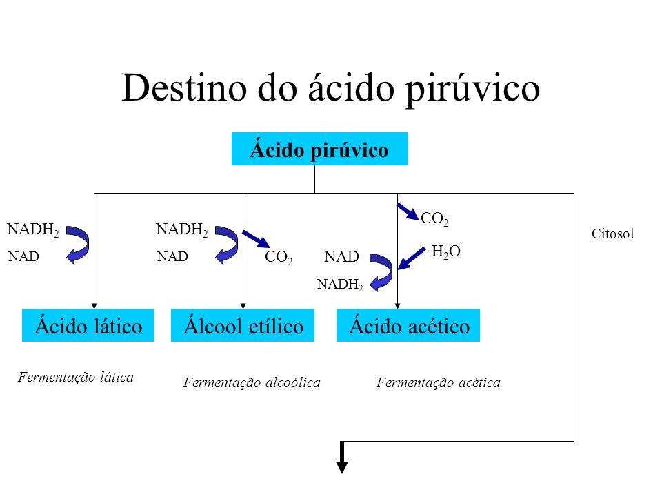 Ácido pirúvico CO 2 NADH 2 Acetil 2C Acetil-CoA 2C Coenzima A Matriz mitocondrial Ácido oxalacético Ácido cítrico 6C 4C 5C CO 2 NADH 2 CO 2 NADH 2 ATP NADH 2 FADH 2