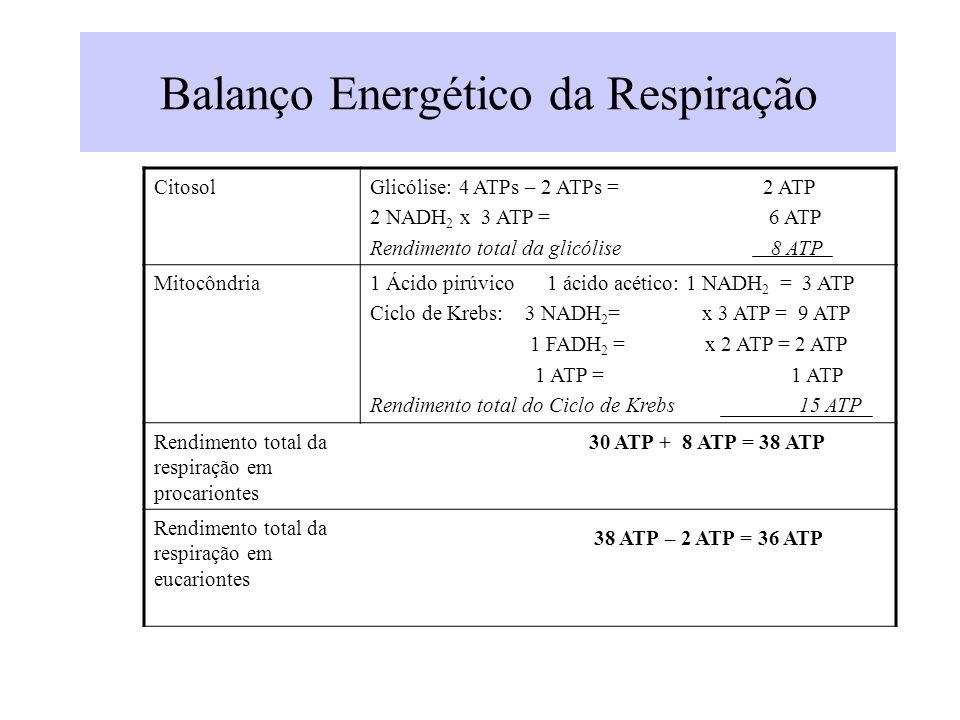 Balanço Energético da Respiração CitosolGlicólise: 4 ATPs – 2 ATPs = 2 ATP 2 NADH 2 x 3 ATP = 6 ATP Rendimento total da glicólise 8 ATP Mitocôndria1 Á