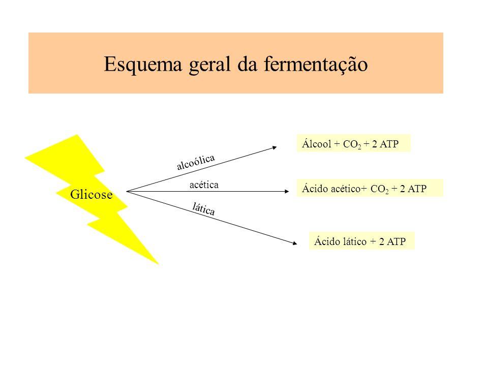 Esquema geral da fermentação Glicose Álcool + CO 2 + 2 ATP Ácido acético+ CO 2 + 2 ATP Ácido lático + 2 ATP alcoólica acética lática