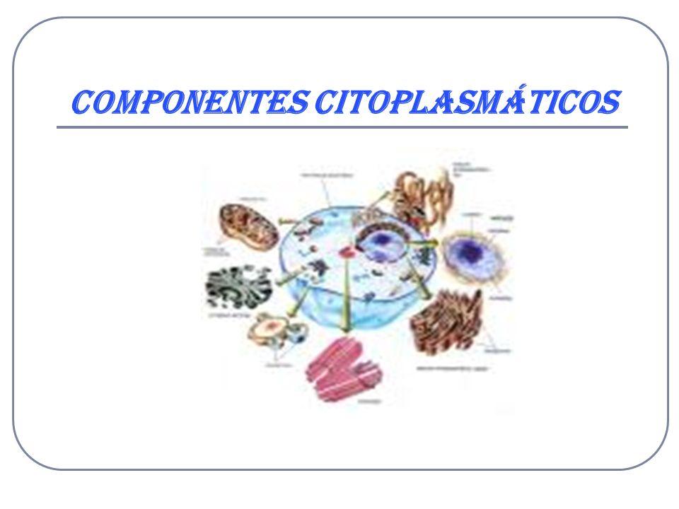 Componentes Citoplasmáticos