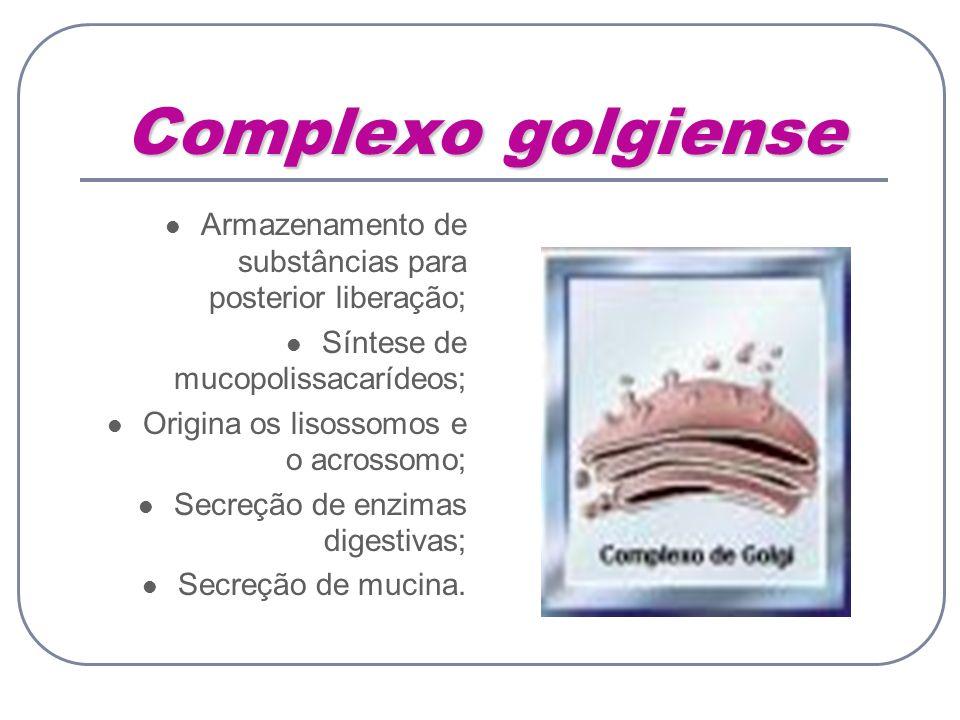 Complexo golgiense Armazenamento de substâncias para posterior liberação; Síntese de mucopolissacarídeos; Origina os lisossomos e o acrossomo; Secreçã