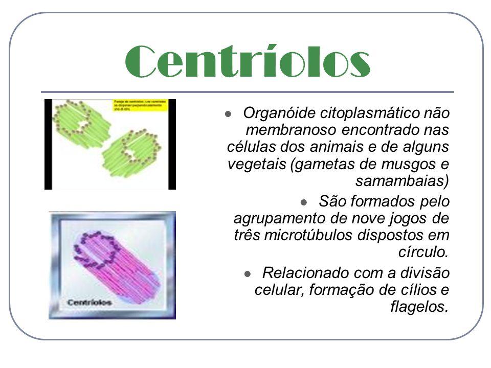 Centríolos Organóide citoplasmático não membranoso encontrado nas células dos animais e de alguns vegetais (gametas de musgos e samambaias) São formad