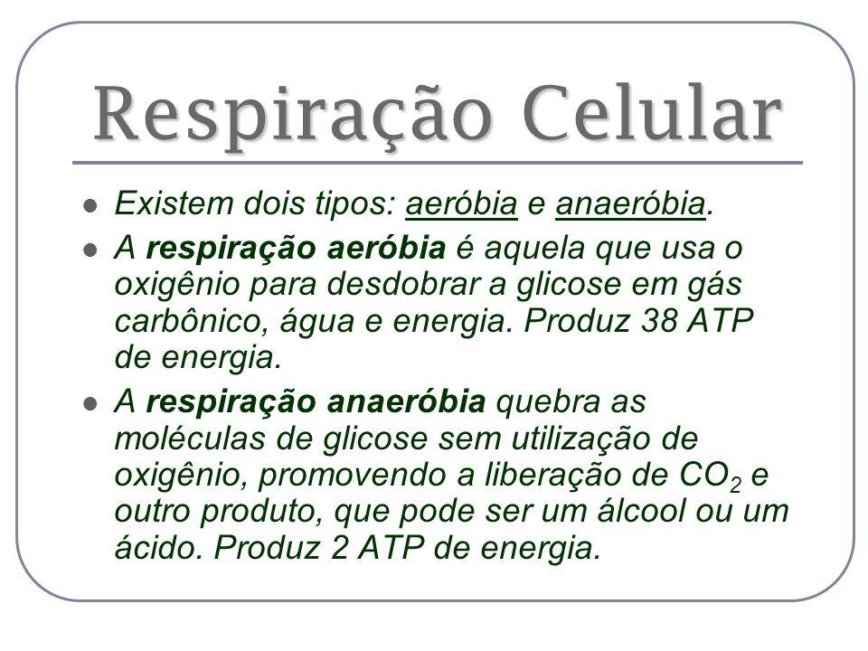 Respiração Celular Existem dois tipos: aeróbia e anaeróbia. A respiração aeróbia é aquela que usa o oxigênio para desdobrar a glicose em gás carbônico