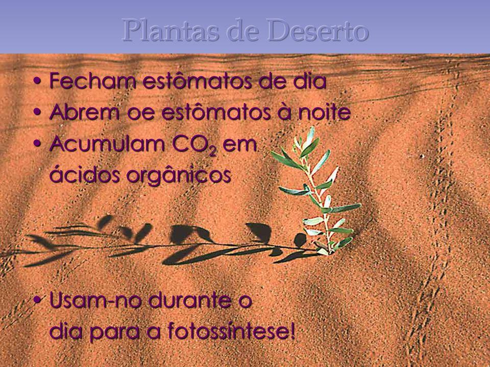 Fecham estômatos de diaFecham estômatos de dia Abrem oe estômatos à noiteAbrem oe estômatos à noite Acumulam CO 2 emAcumulam CO 2 em ácidos orgânicos Usam-no durante oUsam-no durante o dia para a fotossíntese!