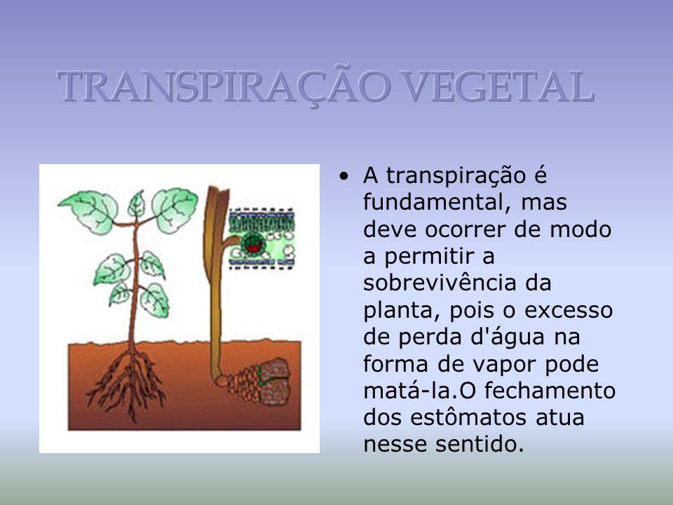 A transpiração é fundamental, mas deve ocorrer de modo a permitir a sobrevivência da planta, pois o excesso de perda d água na forma de vapor pode matá-la.O fechamento dos estômatos atua nesse sentido.