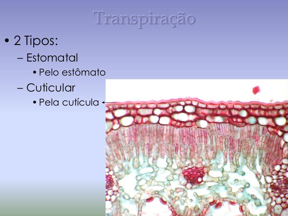2 Tipos: –Estomatal Pelo estômato –Cuticular Pela cutícula