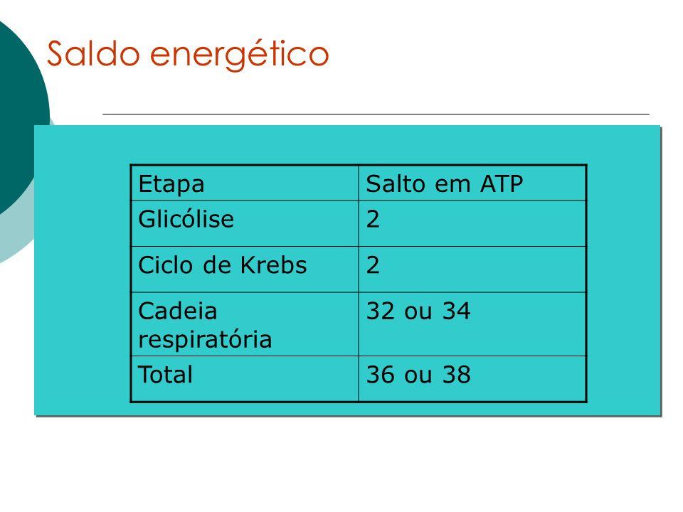 Saldo energético EtapaSalto em ATP Glicólise2 Ciclo de Krebs2 Cadeia respiratória 32 ou 34 Total36 ou 38