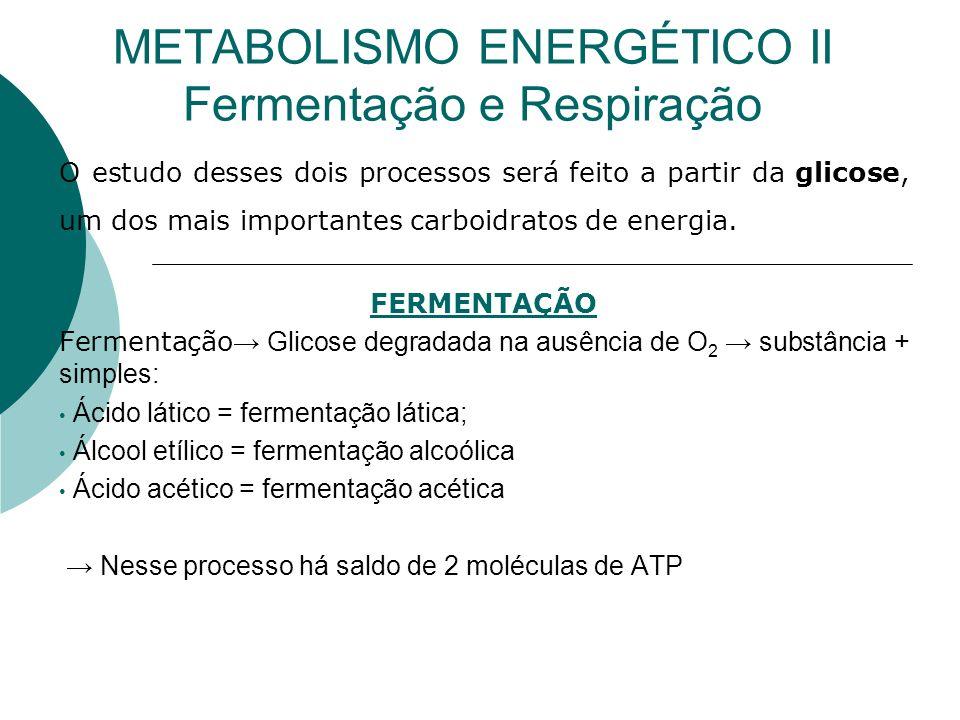 METABOLISMO ENERGÉTICO II Fermentação e Respiração O estudo desses dois processos será feito a partir da glicose, um dos mais importantes carboidratos