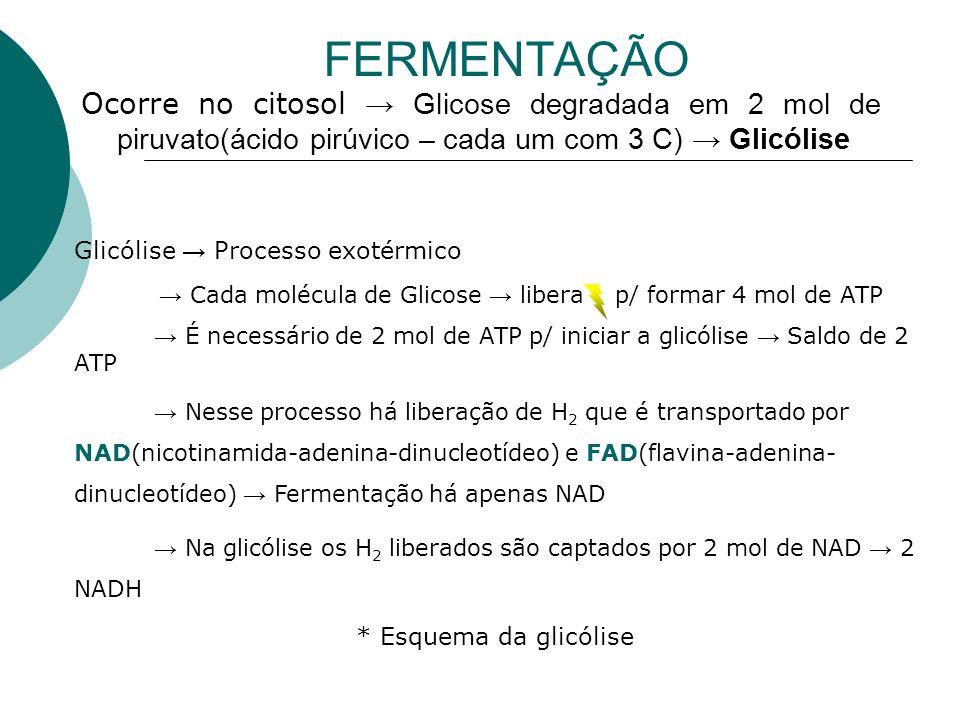 FERMENTAÇÃO Ocorre no citosol Glicose degradada em 2 mol de piruvato(ácido pirúvico – cada um com 3 C) Glicólise Glicólise Processo exotérmico Cada mo