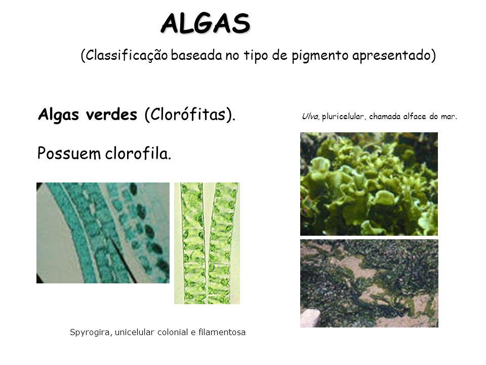 Pigmento ficoxantina, espécies pluricelulares, como o Fucus, têm aspecto de planta com falsos talos,raízes e folhas, vivendo fixas em profundidade de até 200 metros.