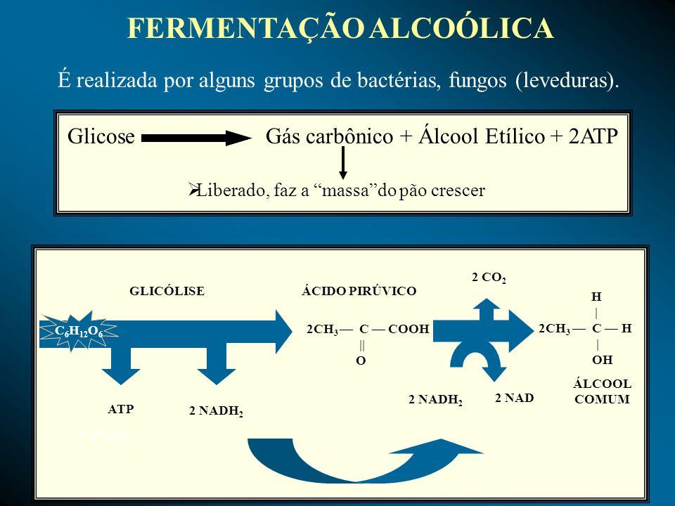 FERMENTAÇÃO ALCOÓLICA É realizada por alguns grupos de bactérias, fungos (leveduras). ATP 2 NADH 2 GLICÓLISE C 6 H 12 O 6 ÁCIDO PIRÚVICO 2CH 3 C COOH