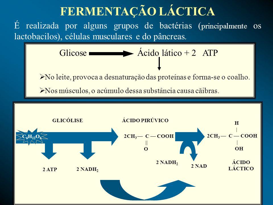 É realizada por alguns grupos de bactérias ( principalmente os lactobacilos), células musculares e do pâncreas. FERMENTAÇÃO LÁCTICA 2 ATP 2 NADH 2 GLI
