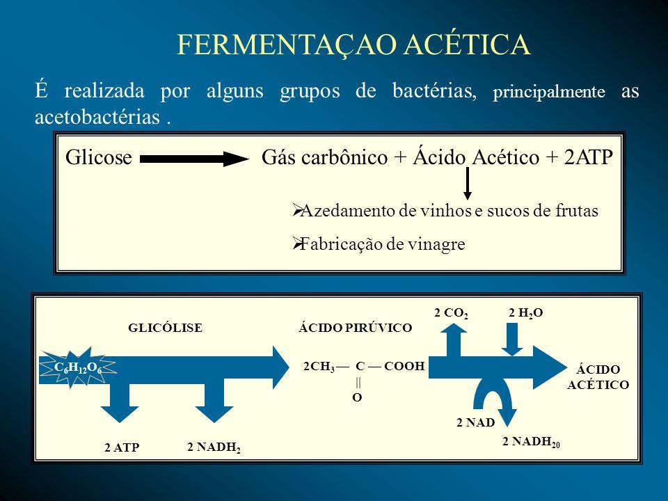 FERMENTAÇAO ACÉTICA É realizada por alguns grupos de bactérias, principalmente as acetobactérias. Glicose Gás carbônico + Ácido Acético + 2ATP Azedame