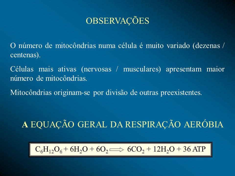 Processo de extração de energia da matéria orgânica na ausência de oxigênio.