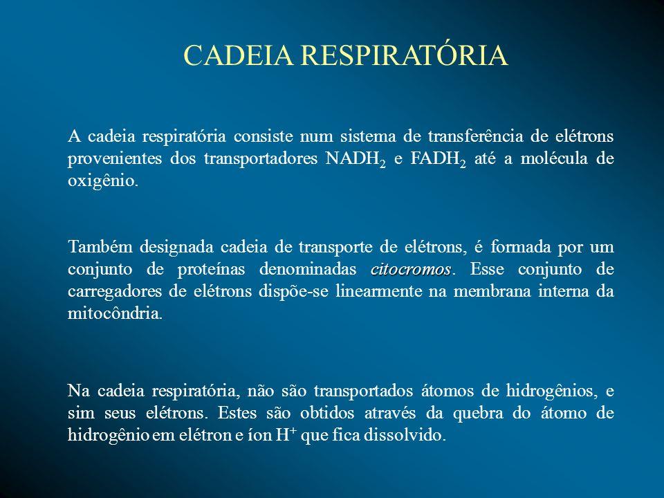 A cadeia respiratória consiste num sistema de transferência de elétrons provenientes dos transportadores NADH 2 e FADH 2 até a molécula de oxigênio. c