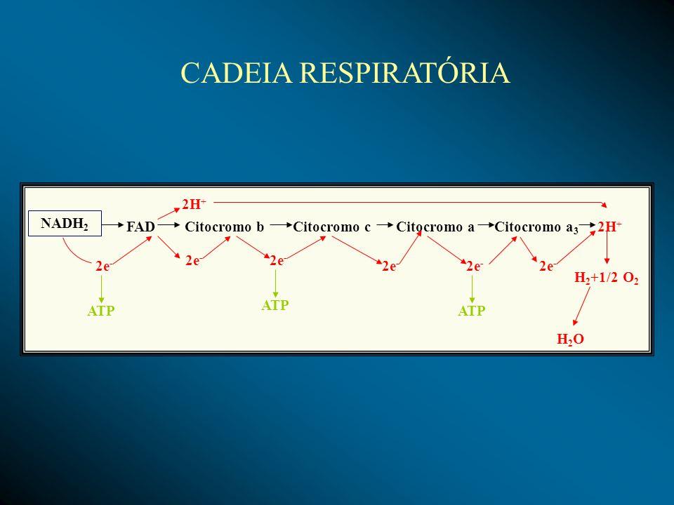 NADH 2 FADCitocromo bCitocromo cCitocromo aCitocromo a 3 2H + H 2 +1/2 O 2 H2OH2O 2e - 2H + 2e - ATP CADEIA RESPIRATÓRIA