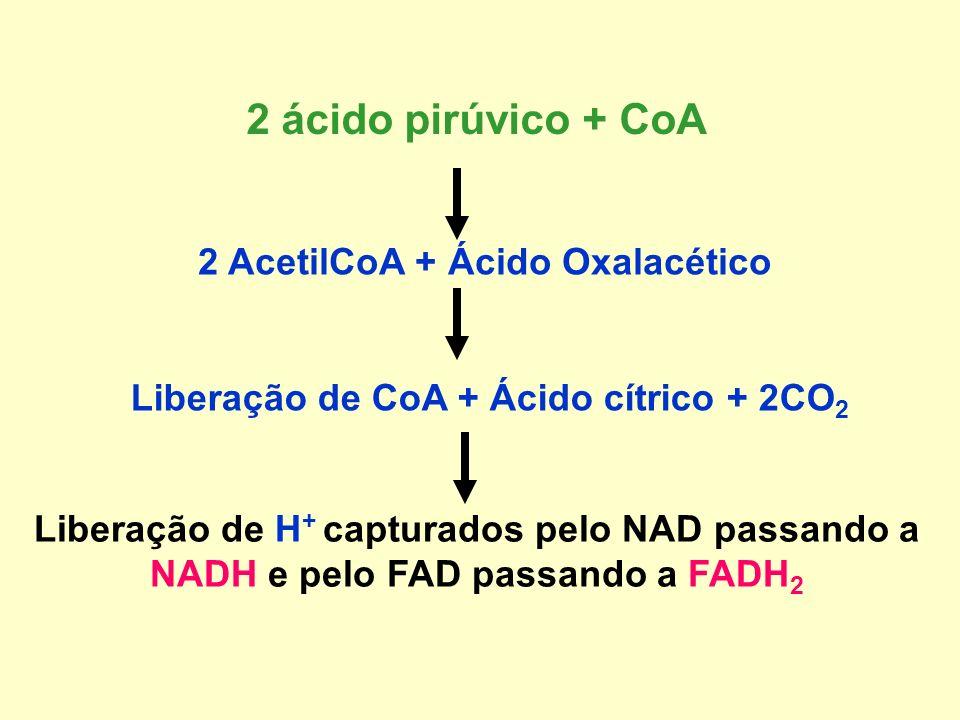 CICIO DE KREBS (Ciclo do ácido cítrico ou tricarboxílico) O ácido pirúvico produzido na glicólise penetra na matriz mitocondrial reagindo com com Coen