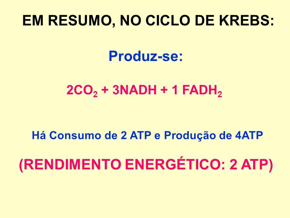 2 AcetilCoA + Ácido Oxalacético Liberação de CoA + Ácido cítrico + 2CO 2 Liberação de H + capturados pelo NAD passando a NADH e pelo FAD passando a FA