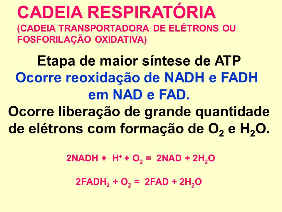 Produz-se: 2CO 2 + 3NADH + 1 FADH 2 Há Consumo de 2 ATP e Produção de 4ATP (RENDIMENTO ENERGÉTICO: 2 ATP) EM RESUMO, NO CICLO DE KREBS:
