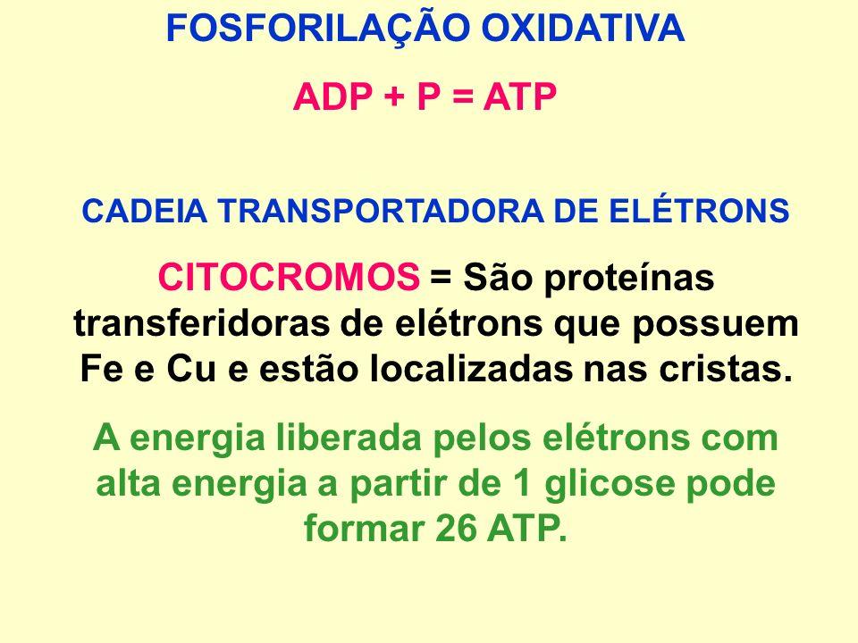 CADEIA RESPIRATÓRIA (CADEIA TRANSPORTADORA DE ELÉTRONS OU FOSFORILAÇÃO OXIDATIVA) Etapa de maior síntese de ATP Ocorre reoxidação de NADH e FADH em NA
