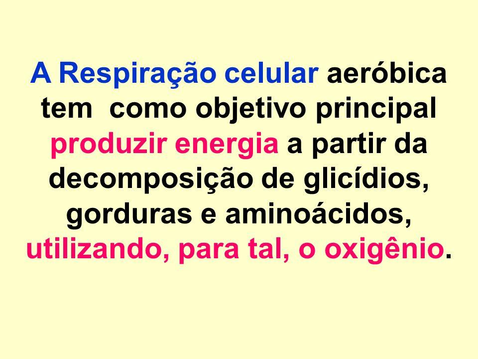 RESPIRAÇÃO CELULAR AERÓBICA Edilson Soares