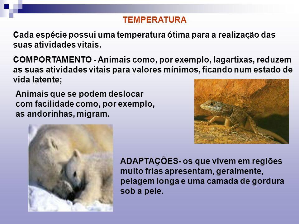 ESTIVAÇÃO Para algumas espécies que vivem em clima quente e árido, os períodos de seca e calor excessivos podem ser tão terríveis quanto os invernos rigorosos.