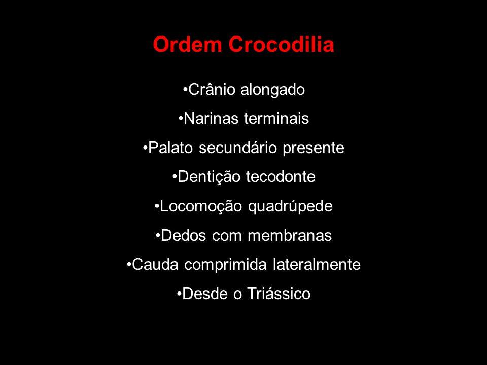 Ordem Crocodilia Crânio alongado Narinas terminais Palato secundário presente Dentição tecodonte Locomoção quadrúpede Dedos com membranas Cauda compri