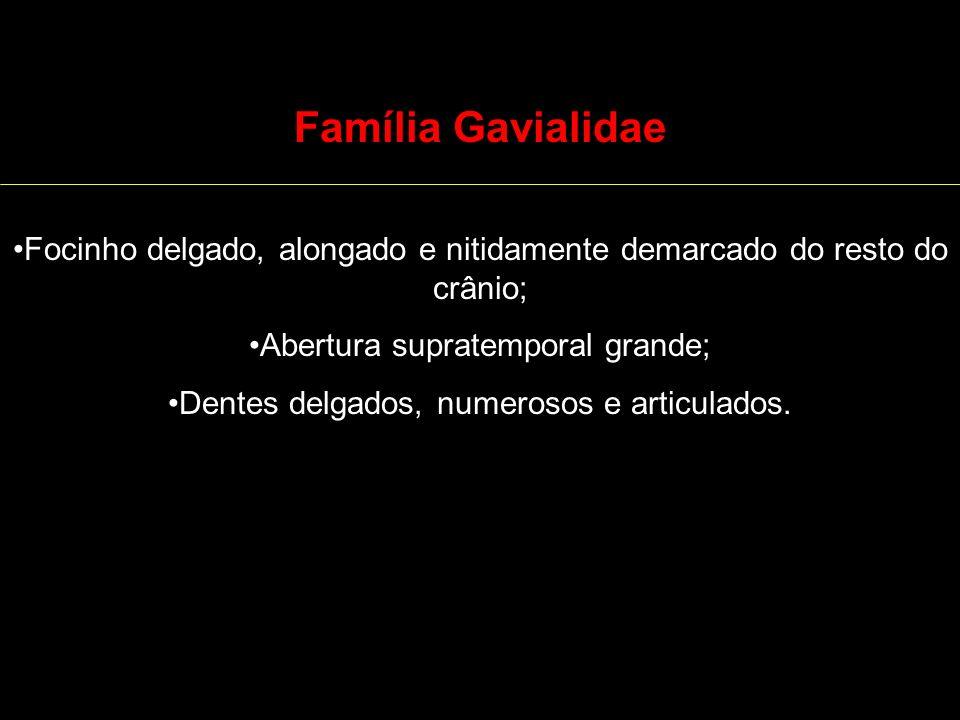 Família Gavialidae Focinho delgado, alongado e nitidamente demarcado do resto do crânio; Abertura supratemporal grande; Dentes delgados, numerosos e a