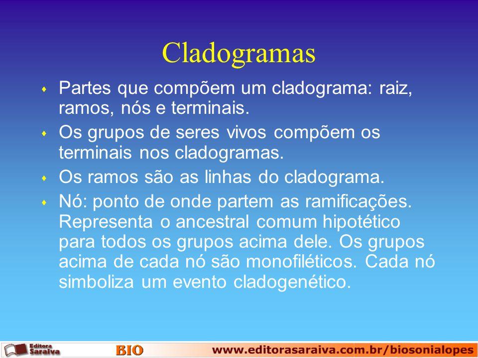 Cladogramas s Partes que compõem um cladograma: raiz, ramos, nós e terminais. s Os grupos de seres vivos compõem os terminais nos cladogramas. s Os ra
