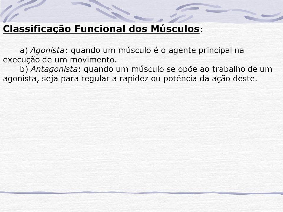 Classificação Funcional dos Músculos : a) Agonista: quando um músculo é o agente principal na execução de um movimento.