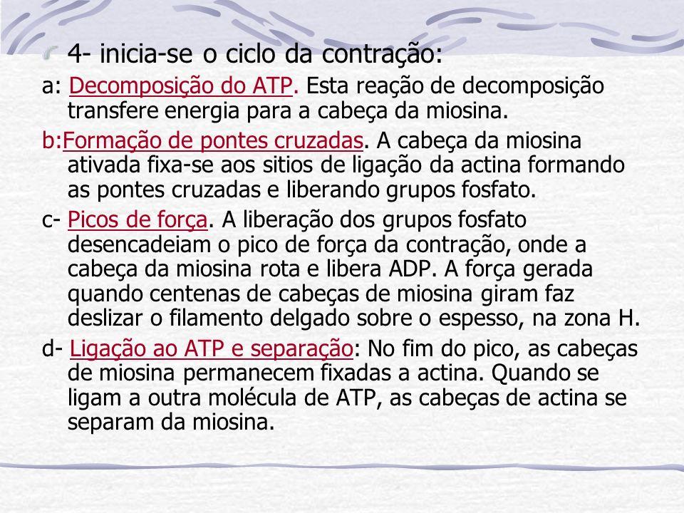 4- inicia-se o ciclo da contração: a: Decomposição do ATP.