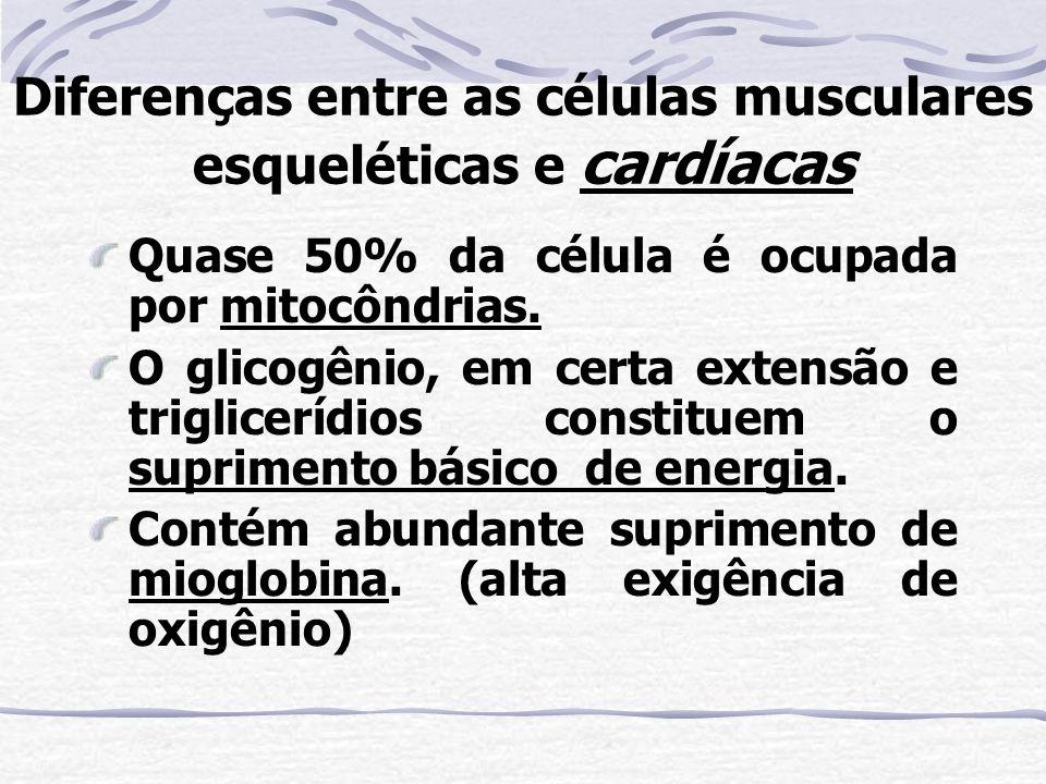 Diferenças entre as células musculares esqueléticas e cardíacas Quase 50% da célula é ocupada por mitocôndrias.