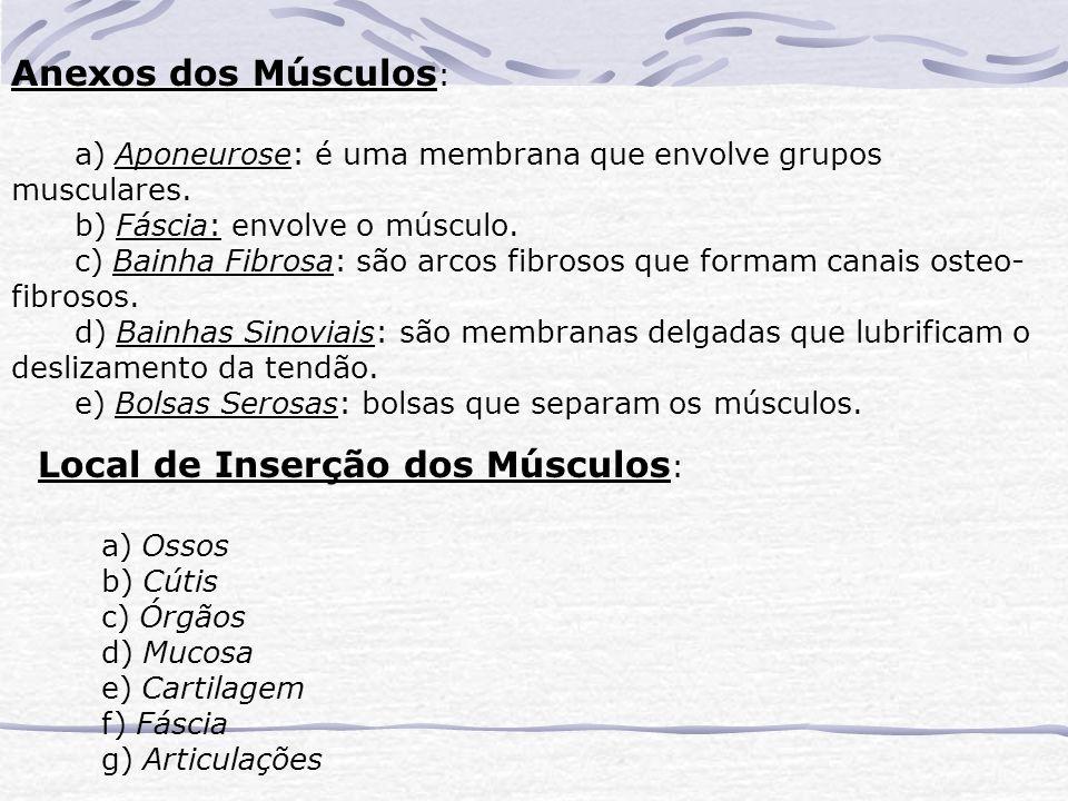 Anexos dos Músculos : a) Aponeurose: é uma membrana que envolve grupos musculares.