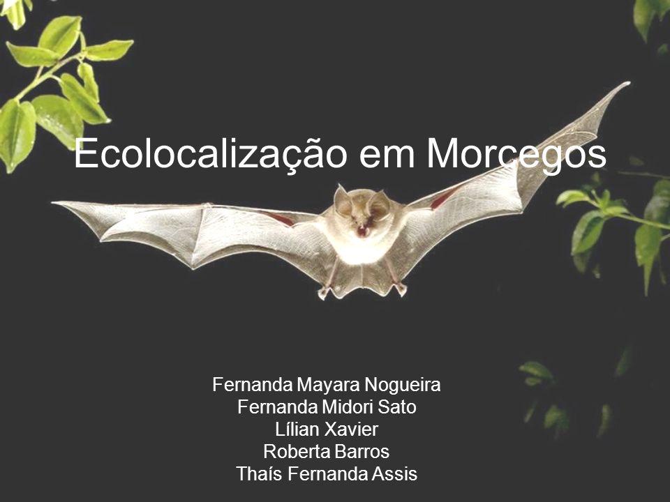 Evolução da ecolocalização em morcegos Chamados de ecolocalização dividos em 8 categorias: 1.Morcegos sem ecolocação: frugívoros do Velho Mundo (Pteropodidae).