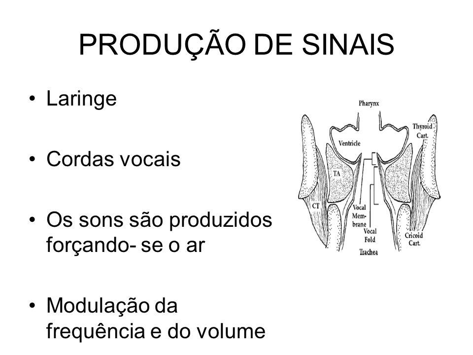 PRODUÇÃO DE SINAIS Laringe Cordas vocais Os sons são produzidos forçando- se o ar Modulação da frequência e do volume