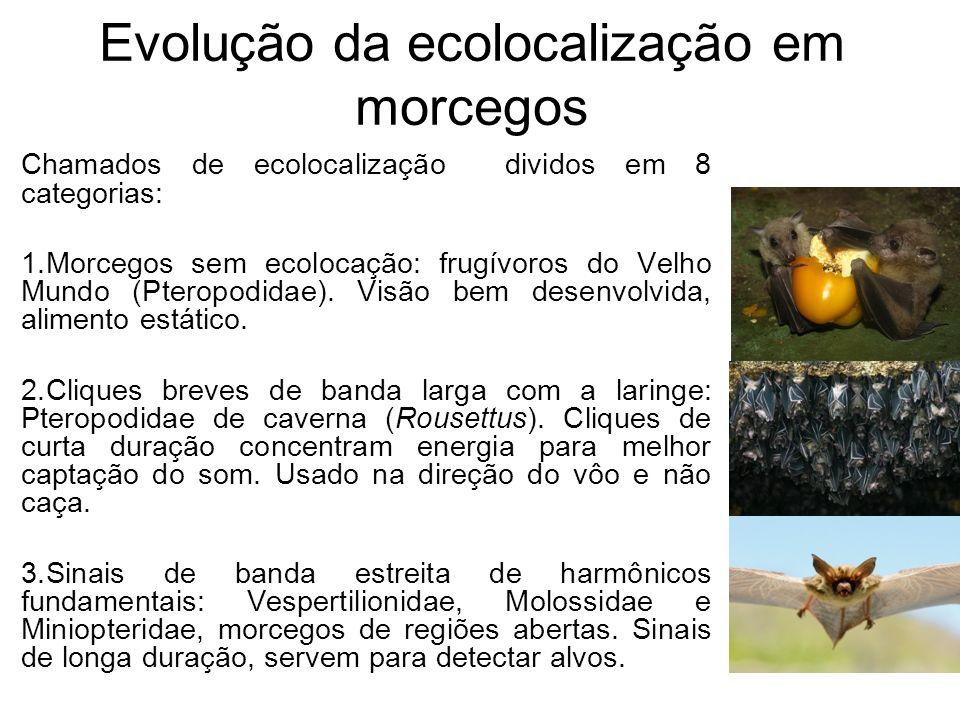 Evolução da ecolocalização em morcegos Chamados de ecolocalização dividos em 8 categorias: 1.Morcegos sem ecolocação: frugívoros do Velho Mundo (Ptero