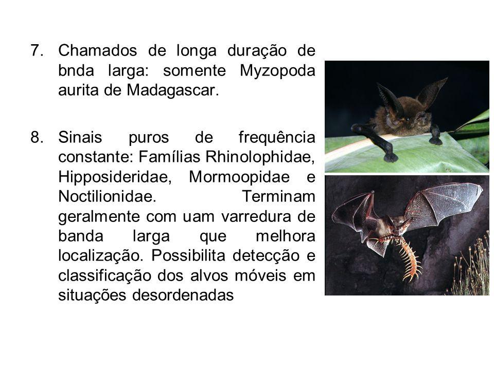 7.Chamados de longa duração de bnda larga: somente Myzopoda aurita de Madagascar. 8.Sinais puros de frequência constante: Famílias Rhinolophidae, Hipp