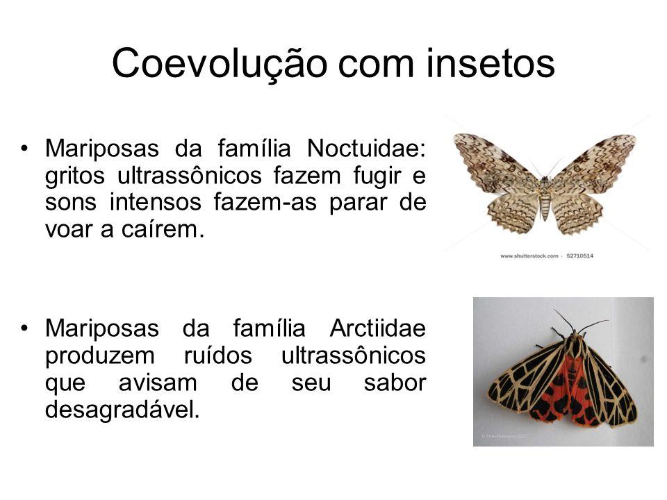 Coevolução com insetos Mariposas da família Noctuidae: gritos ultrassônicos fazem fugir e sons intensos fazem-as parar de voar a caírem. Mariposas da