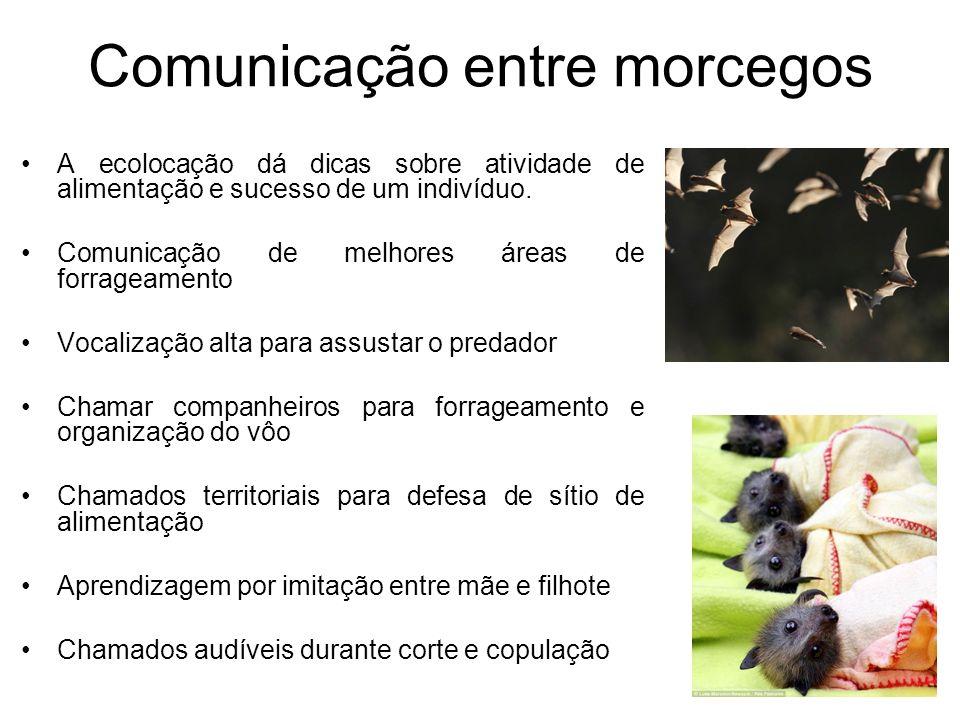 Comunicação entre morcegos A ecolocação dá dicas sobre atividade de alimentação e sucesso de um indivíduo. Comunicação de melhores áreas de forrageame