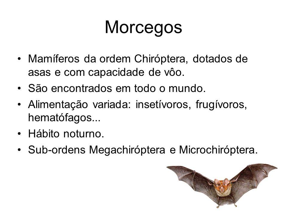 Morcegos Mamíferos da ordem Chiróptera, dotados de asas e com capacidade de vôo. São encontrados em todo o mundo. Alimentação variada: insetívoros, fr