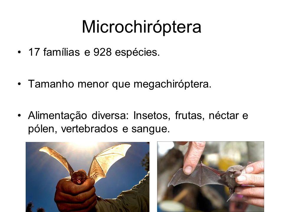 Microchiróptera 17 famílias e 928 espécies. Tamanho menor que megachiróptera. Alimentação diversa: Insetos, frutas, néctar e pólen, vertebrados e sang
