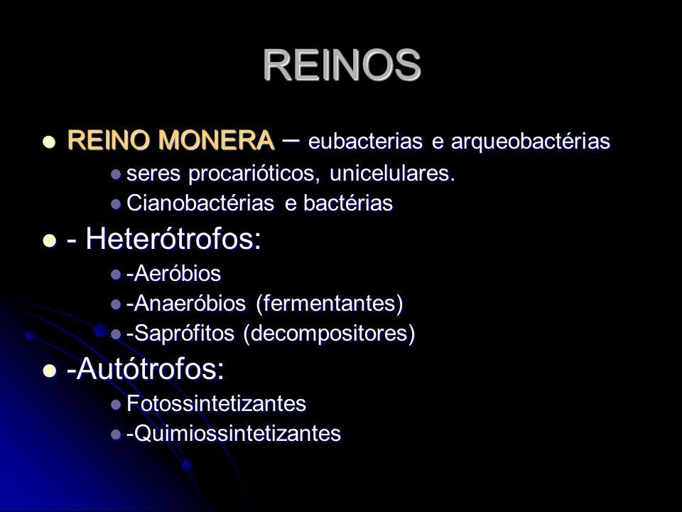 REINOS REINO MONERA – eubacterias e arqueobactérias seres procarióticos, unicelulares. Cianobactérias e bactérias - Heterótrofos: -Aeróbios -Anaeróbio